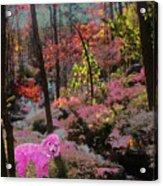 Pink Poodle Paradise Acrylic Print