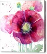 Pink Poppies Acrylic Print