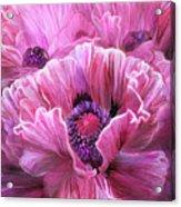Pink Poppy Splash Acrylic Print