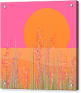 Pink Prairie Flowers Acrylic Print
