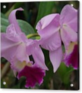 Pink Purple Orchids Acrylic Print