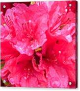 Pink Rain Acrylic Print