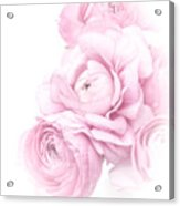 Pink Ranunculus Bouquet Acrylic Print