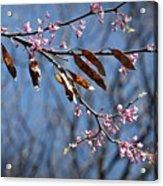 Pink Redbud Tree Blossoms- Fine Art Acrylic Print