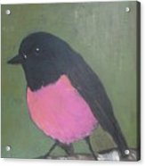 Pink Robin Acrylic Print