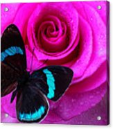 Pink Rose And Black Blue Butterfly Acrylic Print