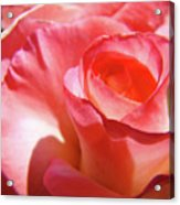 Pink Rose Art Prints Floral Summer Rose Flower Baslee Troutman Acrylic Print