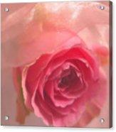 Pink Rose Fantasy 3 Acrylic Print