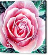 Pink Rose Flower Acrylic Print