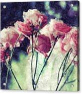 Pink Rose Flowers Acrylic Print