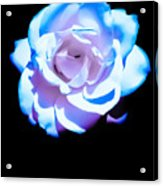 Pink Rose Has The Blues Acrylic Print