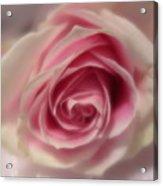Pink Rose Macro Abstract Acrylic Print