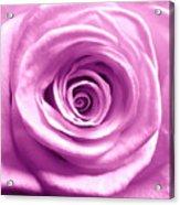 Pink Rose Macro Hdr Acrylic Print