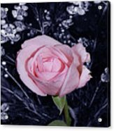 Pink Rose Of Imperfection Acrylic Print