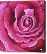 Pink Rose Pastel Painting Acrylic Print