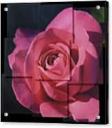 Pink Rose Photo Sculpture Acrylic Print