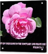 Pink Rose Psalm 134 Vs 2 Acrylic Print