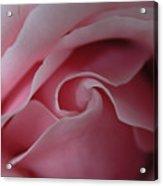 Pink Rose Swirl Acrylic Print