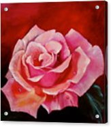 Pink Rose With Dew Drops Jenny Lee Discount Acrylic Print