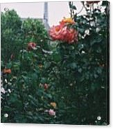 Pink Roses And The Eiffel Tower Acrylic Print