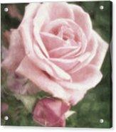 Pink Roses In Anzures 2 Nostalgic Acrylic Print