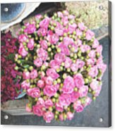 Pink Roses Photograph Acrylic Print