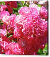 Pink Roses Summer Rose Garden Roses Giclee Art Prints Baslee Troutman Acrylic Print