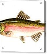 Pink Salmon Acrylic Print