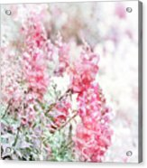 Pink Snapdragons Watercolor Acrylic Print