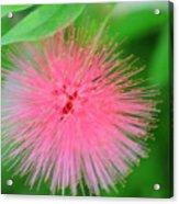 Pink Spikes Acrylic Print