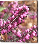 Pink Spray Of Flowers Acrylic Print
