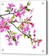 Pink Spring Acrylic Print