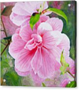 Pink Swirl Garden Acrylic Print by Shelley Irish