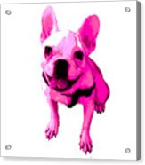 Pink Terrier Acrylic Print