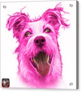 Pink Terrier Mix 2989 - Wb Acrylic Print