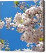 Pink Tree Blossoms Art Prints 55 Spring Flowers Blue Sky Landscape  Acrylic Print