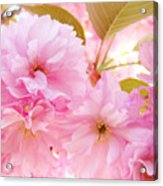 Pink Tree Blossoms Art Prints Spring Blossoms Baslee Troutman Acrylic Print