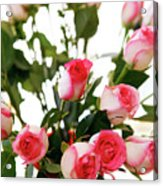 Pink Trimmed Roses Acrylic Print