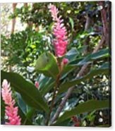 Pink Tropical Flowers Acrylic Print