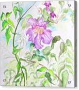 Pink Trumpet Vine Acrylic Print