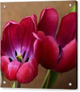 Pink Tulip Pair Acrylic Print