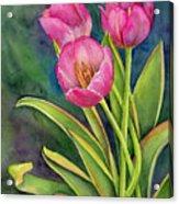 Pink Tulip Twist Acrylic Print