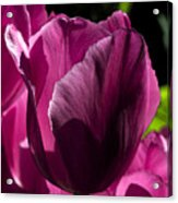 Pink Tulip Watercolor Acrylic Print