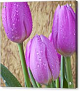 Pink Tulips Acrylic Print by Garry Gay