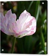 Sun Kissed Flower Acrylic Print
