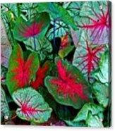 Pink Veined Acrylic Print
