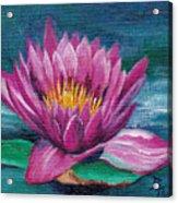 Pink Water Lily Original Painting Acrylic Print
