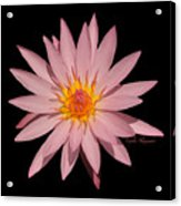 Pink Water Lily Transparent Acrylic Print