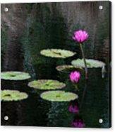 Pink Waterlillies Acrylic Print