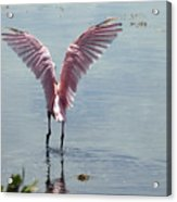 Pink Wings Acrylic Print
